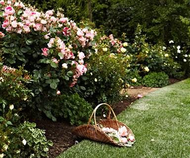 3 rose varieties you need in your garden