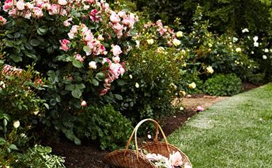 3 rose varieties you need in your garden