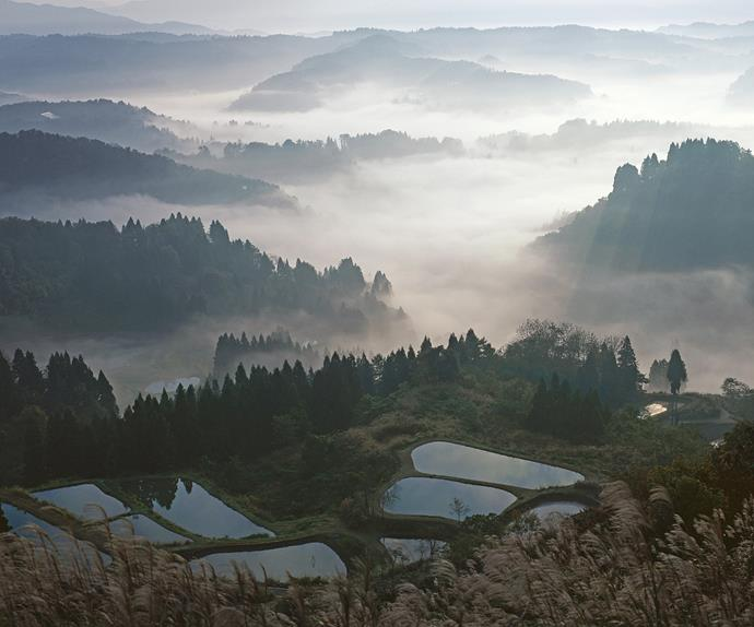 Japan design trail