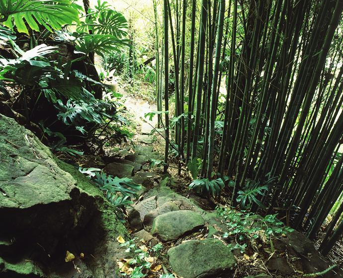 Avoid bamboo. It sends tough runners through the soil and is extremely difficult to kill. Photo: ACP Pohotographic / bauersyndication.com.au.
