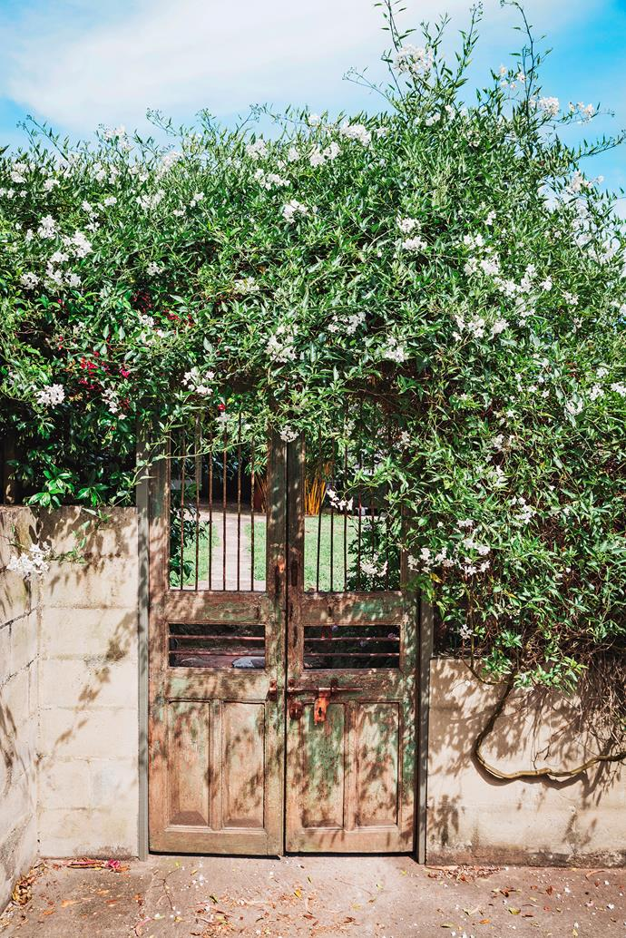 A white potato vine climbs the beautiful Indian Jali gates that Janice found at an antiques barn.