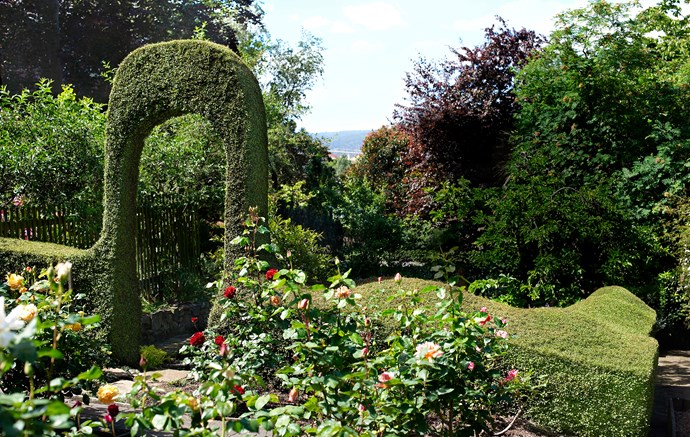 The rose garden consists of two concentric garden beds with a selection of David Austin varieties in the central bed and hybrid tea roses surrounding it. The hedge is *Muehlenbeckia complexa*.