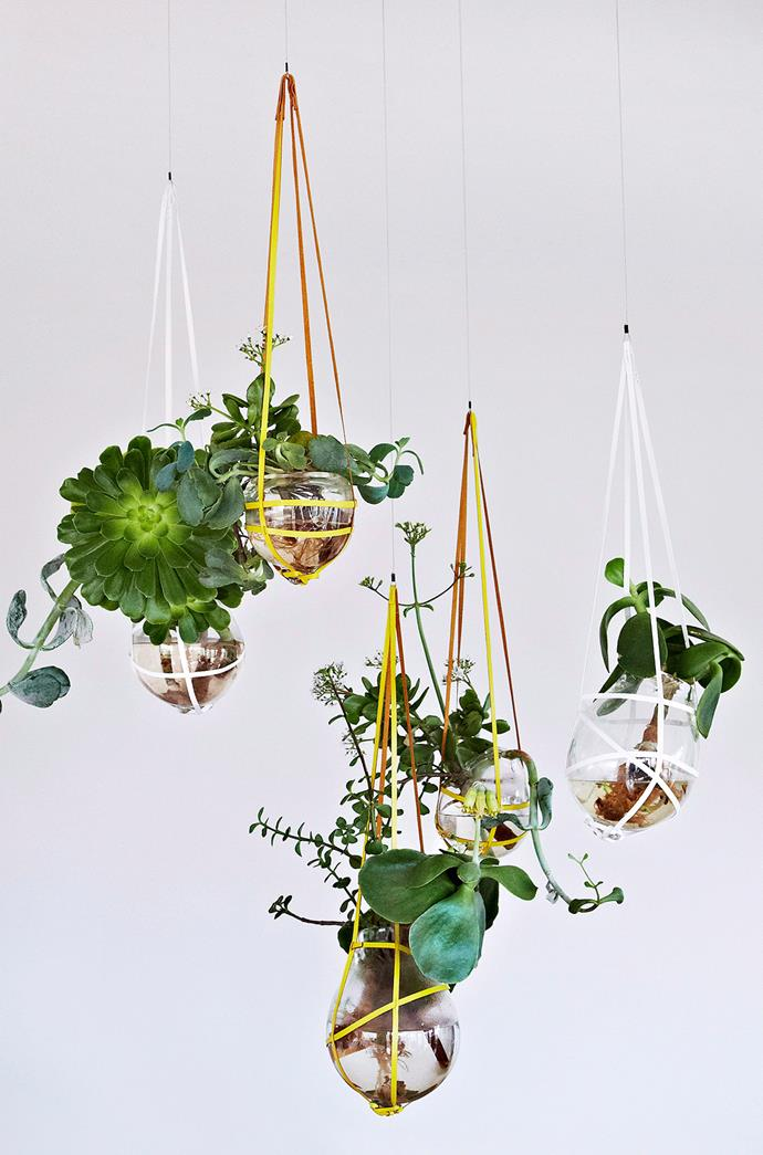 Suspend terrariums for space-saving baubles of green. Photo: bauersyndication.com.au