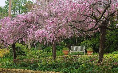 In full bloom: stunning spring gardens