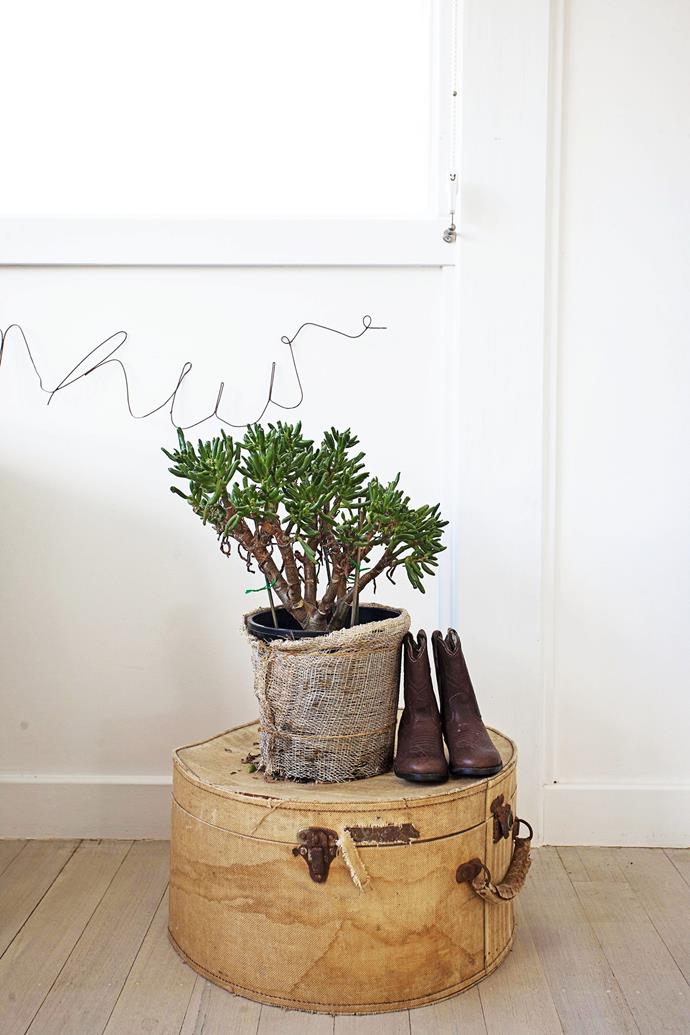 """Combining houseplants with vintage accessories is a trend in [Jamie's beach house renovation](http://www.homestolove.com.au/gallery-jamies-beach-house-renovation-1408