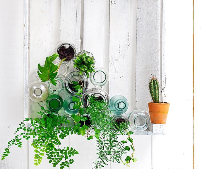 """This [mini DIY green wall](http://www.homestolove.com.au/easy-being-green-cool-indoor-plant-ideas-1856