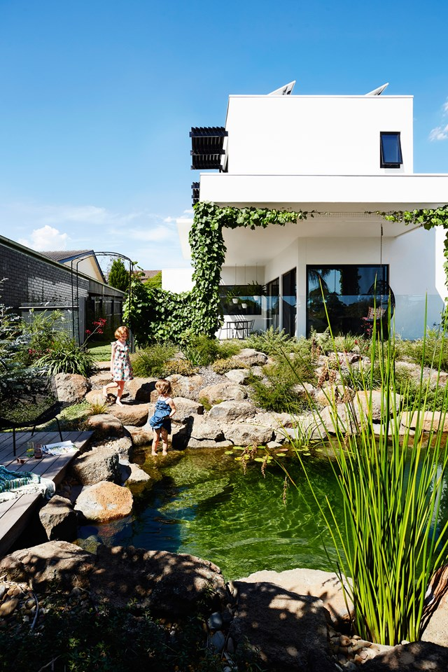The billabong-inspired pool, designed by Natural Swimming Pools and landscaped by Sam Cox Landscape. *Photo: Armelle Habib*