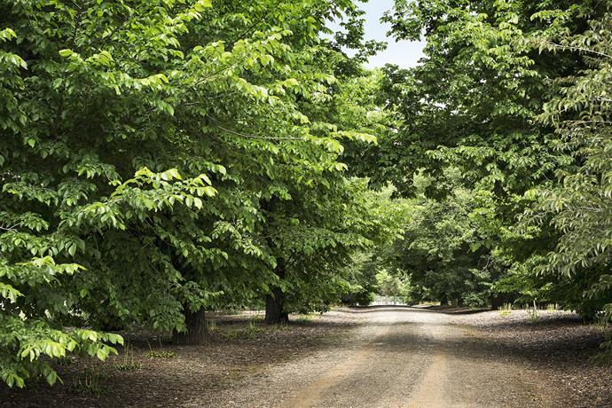 The driveway to the homestead was planted with English and Dutch Elm trees in 1884. These majestic trees line the two-kilometre avenue, a stately entrance to this place of wonderment and learning.