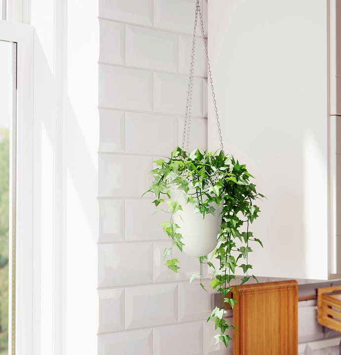 If you are short on floor space, create impact from above and suspend your indoor plants. Photo: bauersyndication.com.au