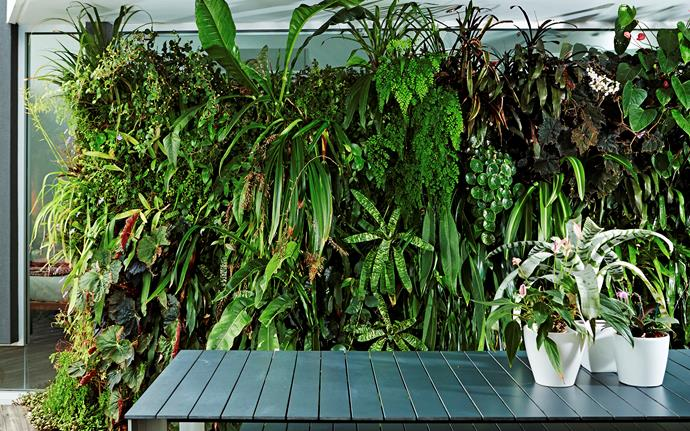 """Green walls can help reduce overall temperatures of a building, improve air quality and reduce noise penetration,"" says Mark."