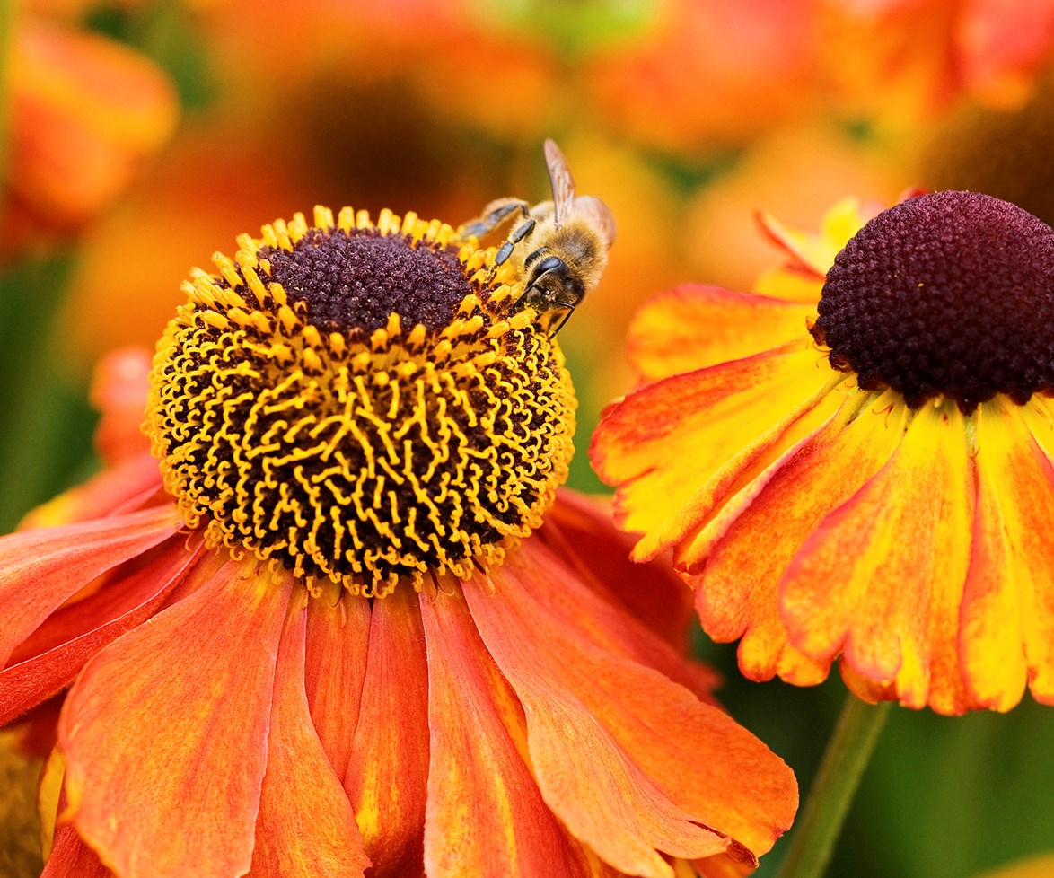 Bees are necessary for the pollination of flowers, vegetables and fruit in any garden.