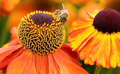How to attract bees to your garden