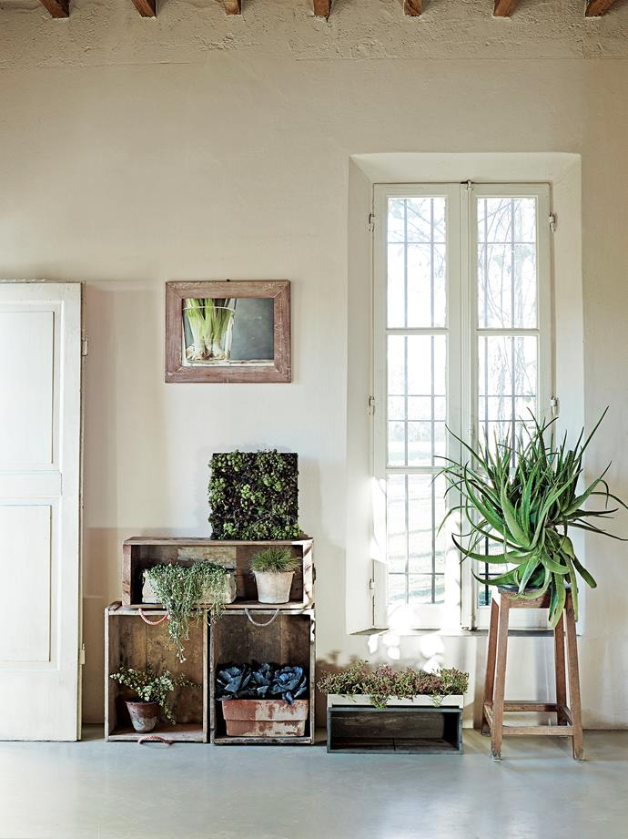 A succulent sitting atop a timber stool, plus the wooden-framed photo of bulbs, further enhances the modern-farmhouse look.