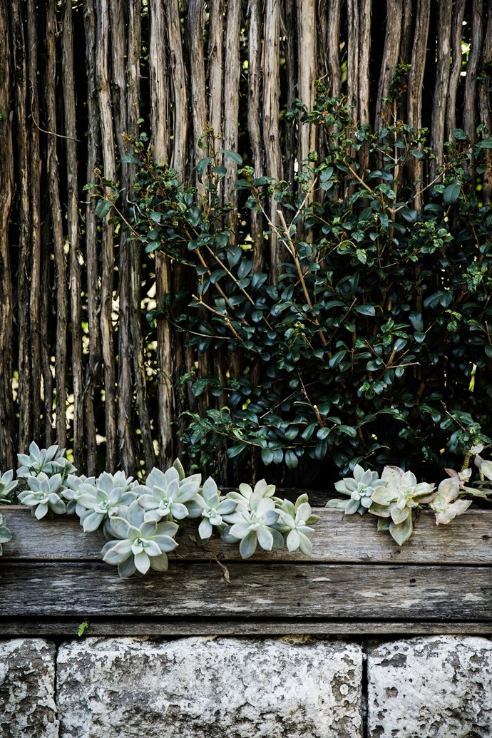 Succulents have been used as a hardy filler in raised garden beds throughout the garden.