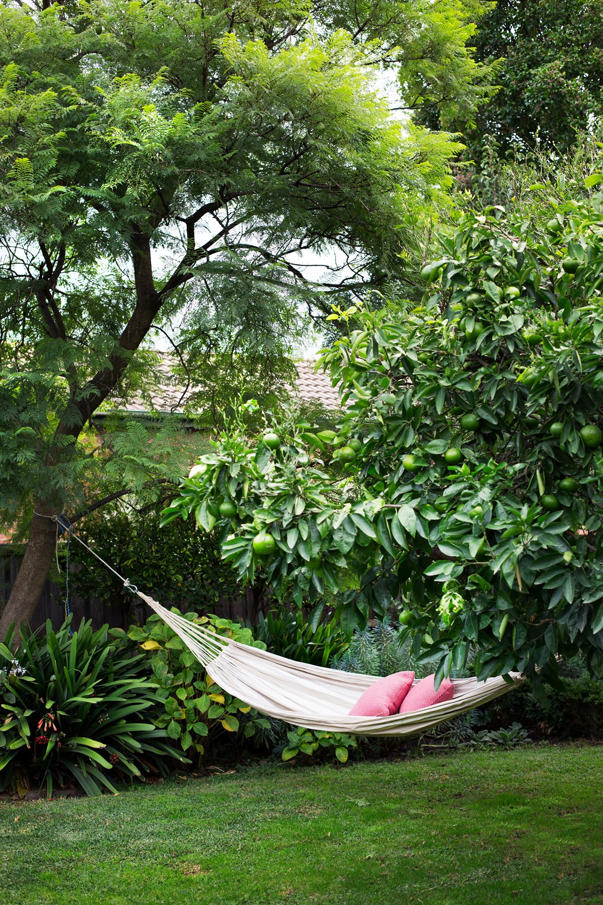 From the place you'd rather be: swinging on a hammock amid flourishing oranges in a [Moroccan inspired garden](http://www.homestolove.com.au/a-multi-functional-family-garden-4400). *Photo: Martina Gemmola / Australian House & Garden*