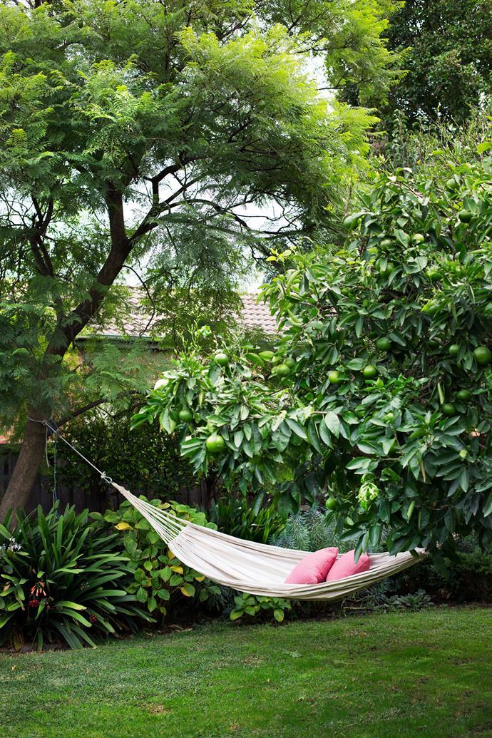 A hammock swings between the mature Seville orange tree and a jacaranda.
