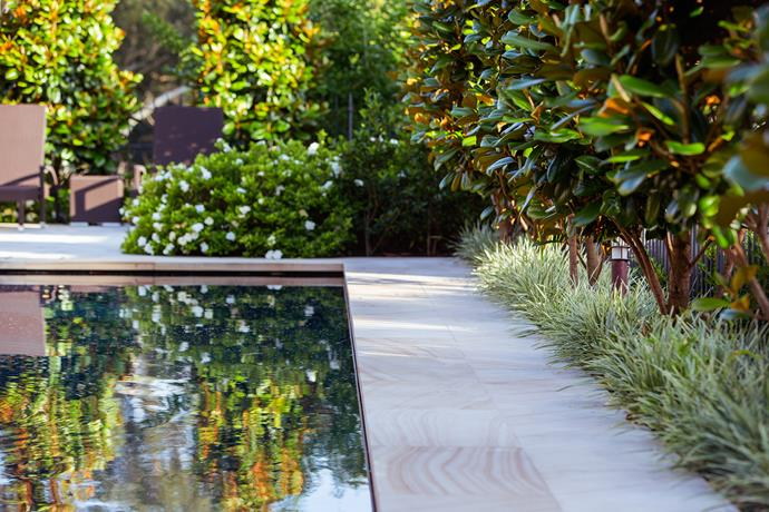 Sandstone flagging frames the pool. Privacy is achieved through boundary planting of magnolia 'Teddy Bear' underplanted with variegated liriope (*Liriope jaburan* 'Variegata').