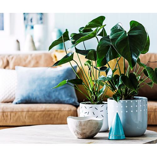 Air Purifying Plants For Bathroom: The 10 Best Air-Purifying Plants