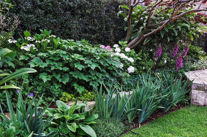 Layers of perennials ensure ever-changing spring colour: white and blue bearded iris appear first followed by pink foxgloves, blue Cranesbill geraniums, white hydrangeas and Japanese windflowers.