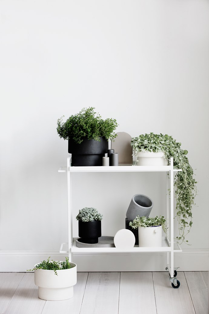 Zakkia's Podium, Handle and Cylinder pots come in various shapes and sizes - perfect for displaying indoor plants with style.