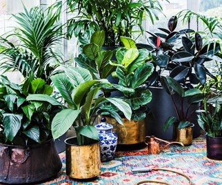 popular indoor plants