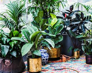 popular indoor plants