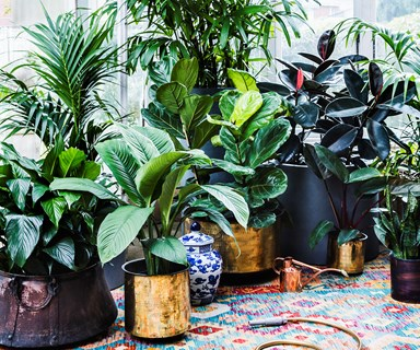 Quiz: Which indoor plant is right for you?