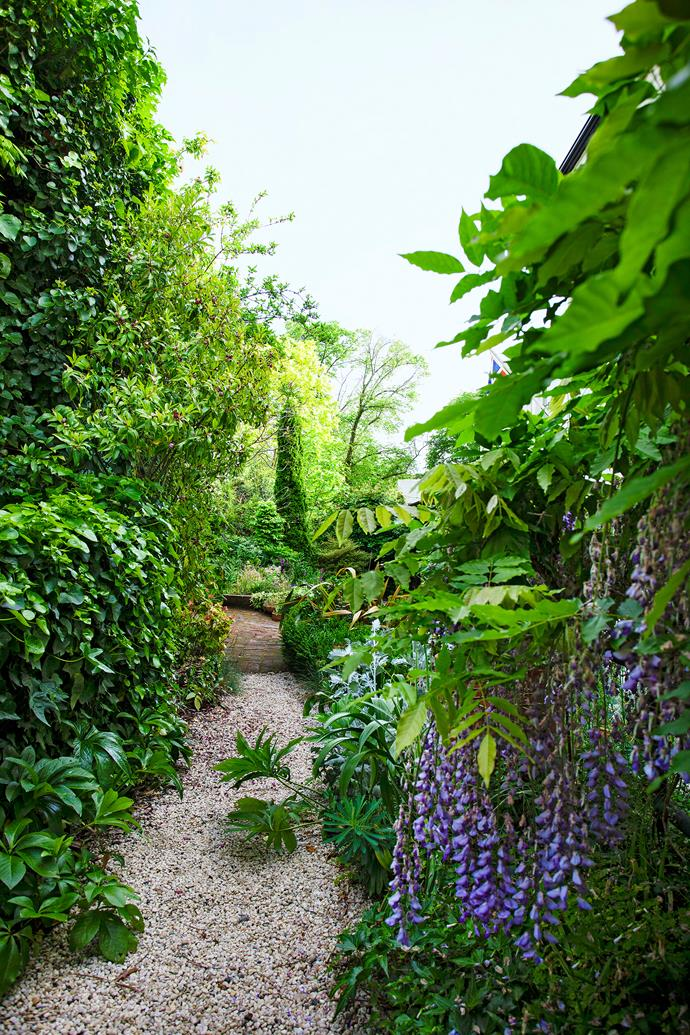 A path meanders past hellebores, wisteria, port wine magnolia, Robinia frisia and a pencil pine (Cupressus sempervirens).
