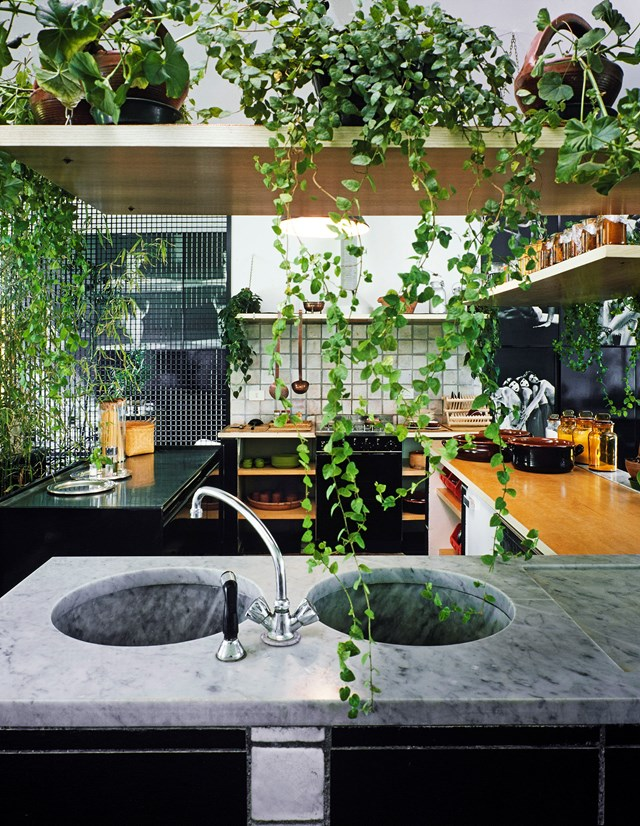 "Saves for indoor vines climbed 260% since September and just keep growing as we hit 2017. [> Check out this high-end 'hippy' kitchen](http://www.homestolove.com.au/a-high-end-hippy-kitchen-4796|target=""_blank""). *Photo: real living*"