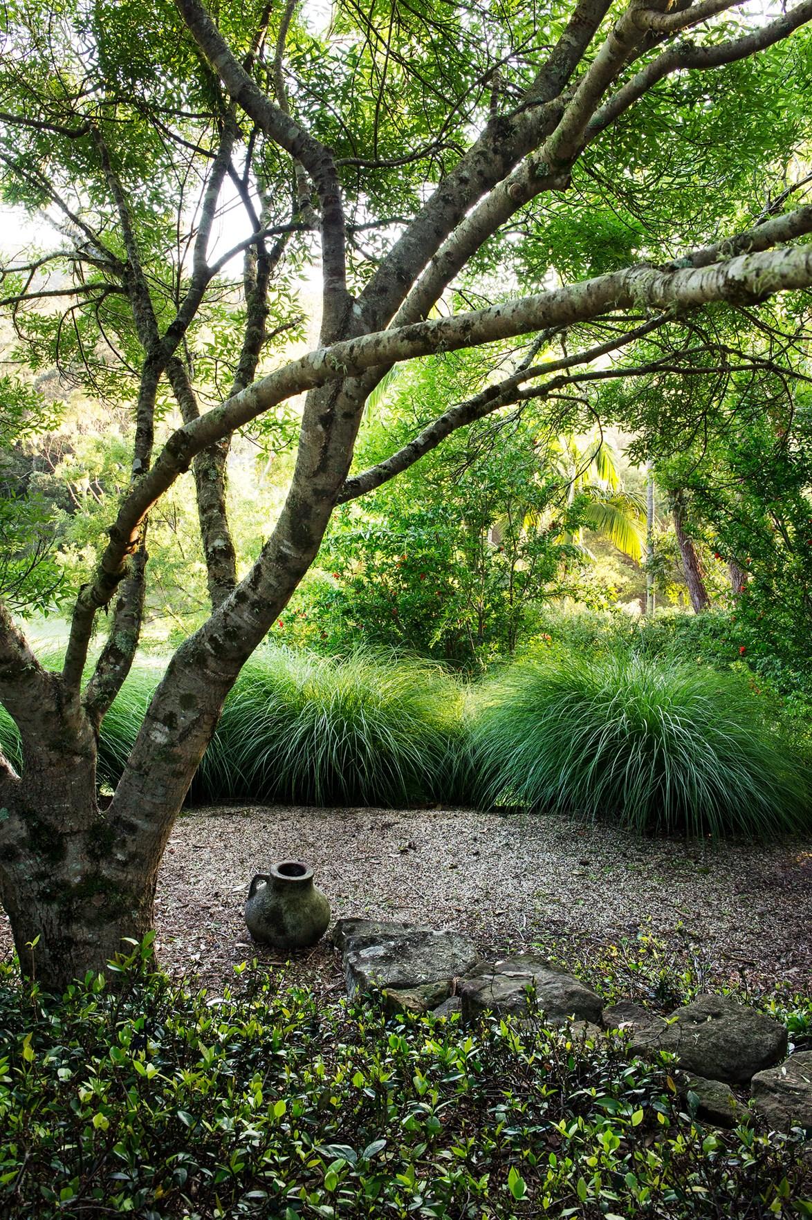 The claret ash has become one of Sydney's favourite deciduous street trees. *Photo:* Brigid Arnott