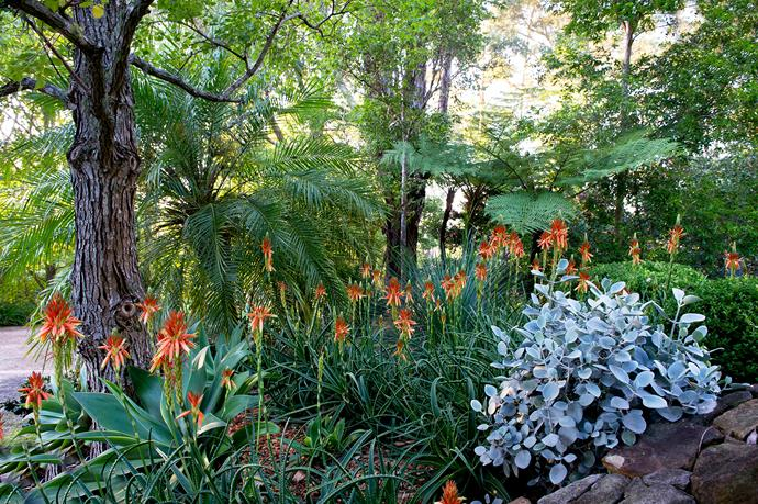 """""""The garden's changed a lot over the years,"""" says Marie. """"The mature trees have become the feature and there aren't as many small flowering plants. It's now a garden of trees, hedges, textured foliage plants and grasses."""""""