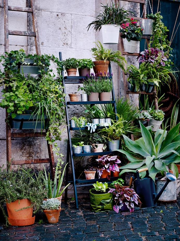 "Think [vertical](http://www.homestolove.com.au/your-guide-to-vertical-gardens-3021|target=""_blank"") if your space is limited. Pots from [Ikea](http://www.ikea.com/