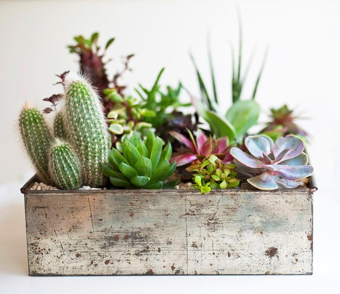 "[> Find out how to propagate your own succulents here.](http://www.homestolove.com.au/strike-your-own-succulents-3524|target=""_blank"")"