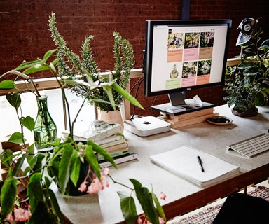 10 plants that will thrive in an office