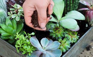 DIY succulent gardens
