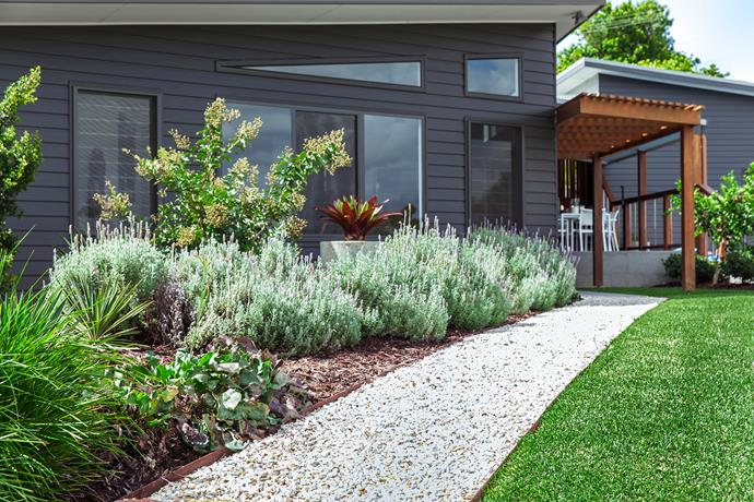 """Claudia satisfied Sandy's love of lavender but offers a word of caution. """"It's a one-year wonder in a humid location like Coffs Harbour,"""" she says. """"You have to treat it like an annual and replant every year."""""""