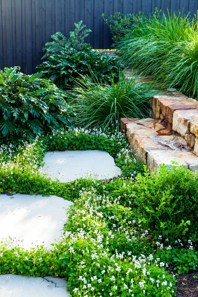 """Native violet (*Viola hederacea*) creates a pretty groundcover beside bluestone stepping stones from [Eco Outdoor](https://www.ecooutdoor.com.au/