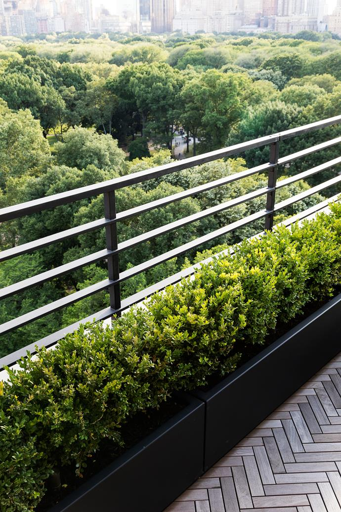 Clipped box hedges (*Buxus sempervirens*) frame the perimeter of the terrace.