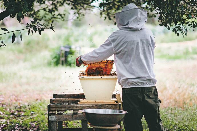 Unless you're taking away they honey, bees are quite docile, so don't fear them!