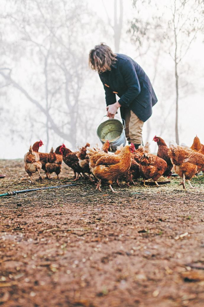 """Choose poultry and eggs that have been raised on small farms - look for the terms """"pastured"""", """"pasture-raised"""" or """"biodynamic""""."""