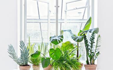 10 plant pros to follow on Instagram