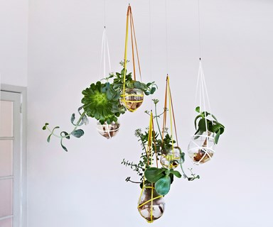 Top 10: Indoor hanging plants
