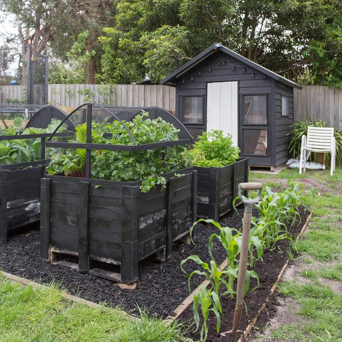 "In the backyard of a [Mornington Peninsula cottage](http://www.homestolove.com.au/renovation-of-an-old-fibro-beach-shack-4405|target=""_blank""), family fun is growing food and raising chickens."