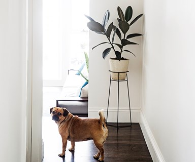 13 common house plants that are toxic to pets