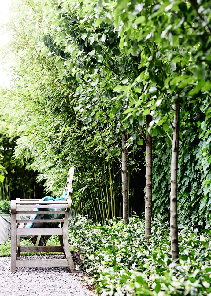 The fence is draped in Boston ivy. Planted 1.9m apart, the pleached Pyrus 'Chanticleer' provide plenty of coverage.