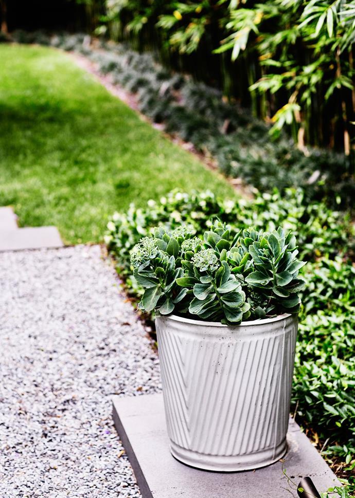 A concrete pot filled with Sedum sits on a bluestone plinth.
