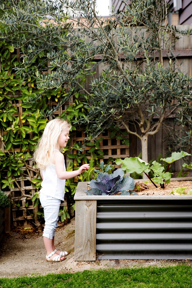"""More people than ever are wanting to [start a vegetable garden](https://www.homestolove.com.au/how-to-start-a-vegetable-patch-5108