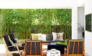 Best screening plants for privacy