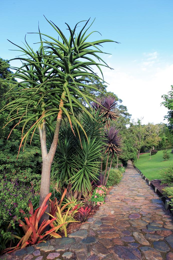 A pathway laid with local river rocks leads through this lush Queensland garden in the Sunshine Coast hinterland. Flowering cordylines and rows of aloe trees (foreground) run the length of the path.