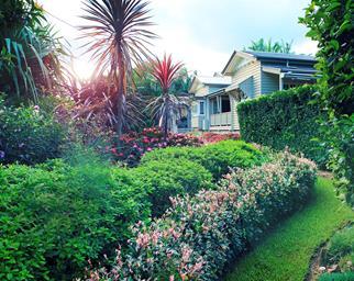 tropical queensland garden